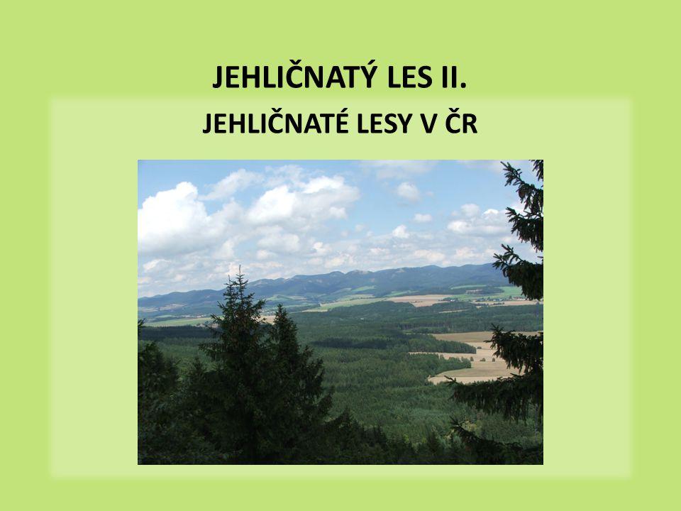 jehličnaté lesy v ČR přirozené v horách – horské smrčiny - od 1000 m n.