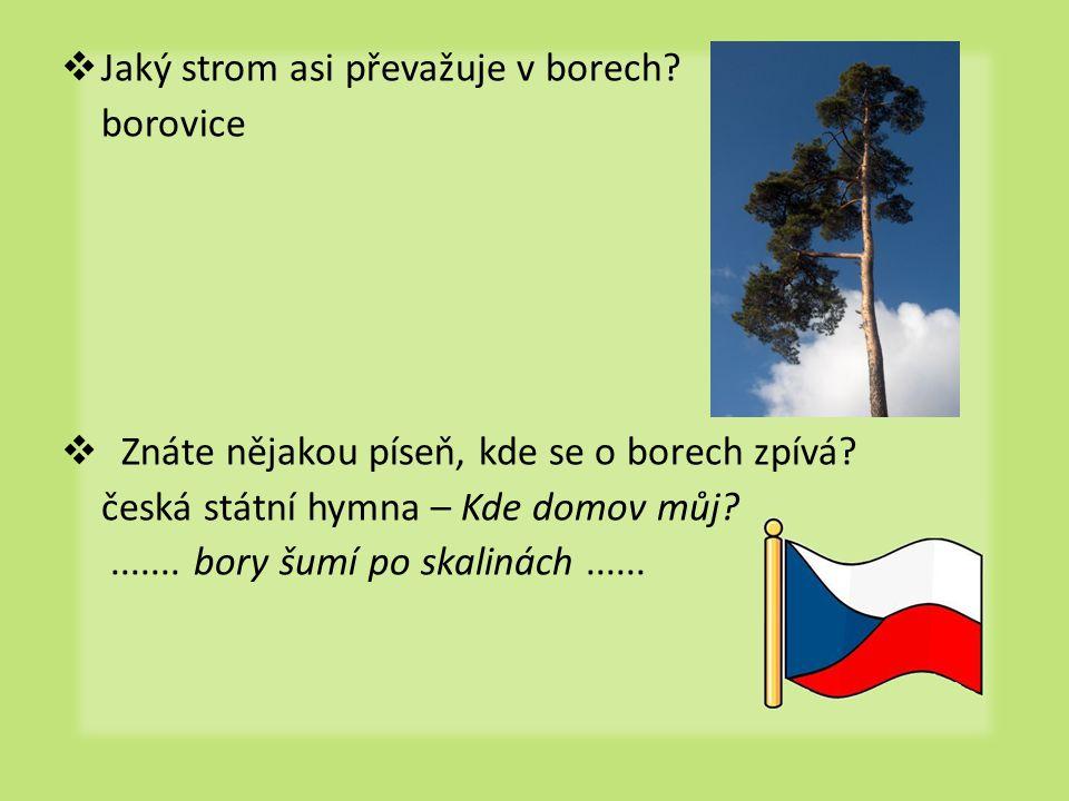  Jaký strom asi převažuje v borech.borovice  Znáte nějakou píseň, kde se o borech zpívá.