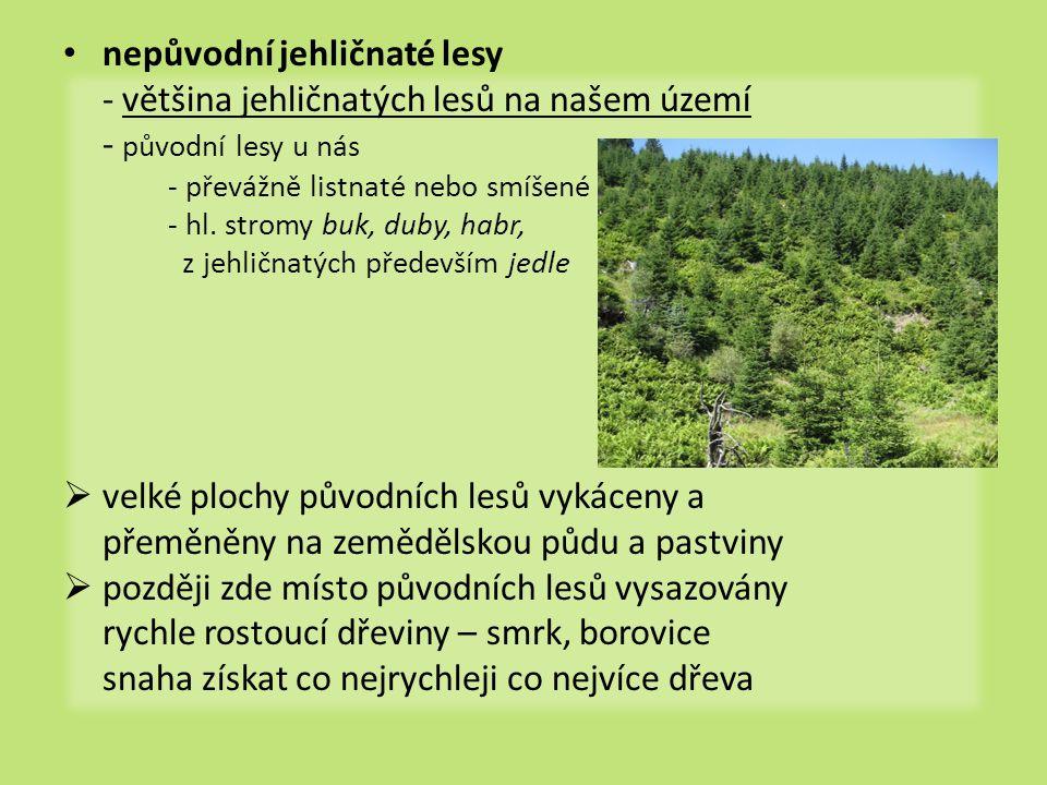 nepůvodní jehličnaté lesy - většina jehličnatých lesů na našem území - původní lesy u nás - převážně listnaté nebo smíšené - hl.