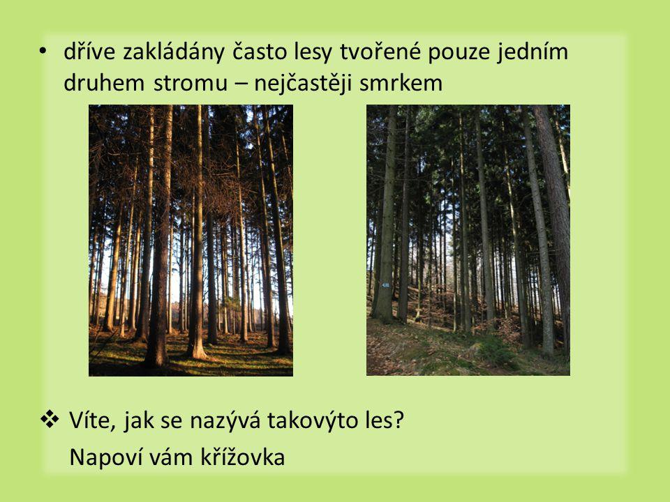 dříve zakládány často lesy tvořené pouze jedním druhem stromu – nejčastěji smrkem  Víte, jak se nazývá takovýto les.