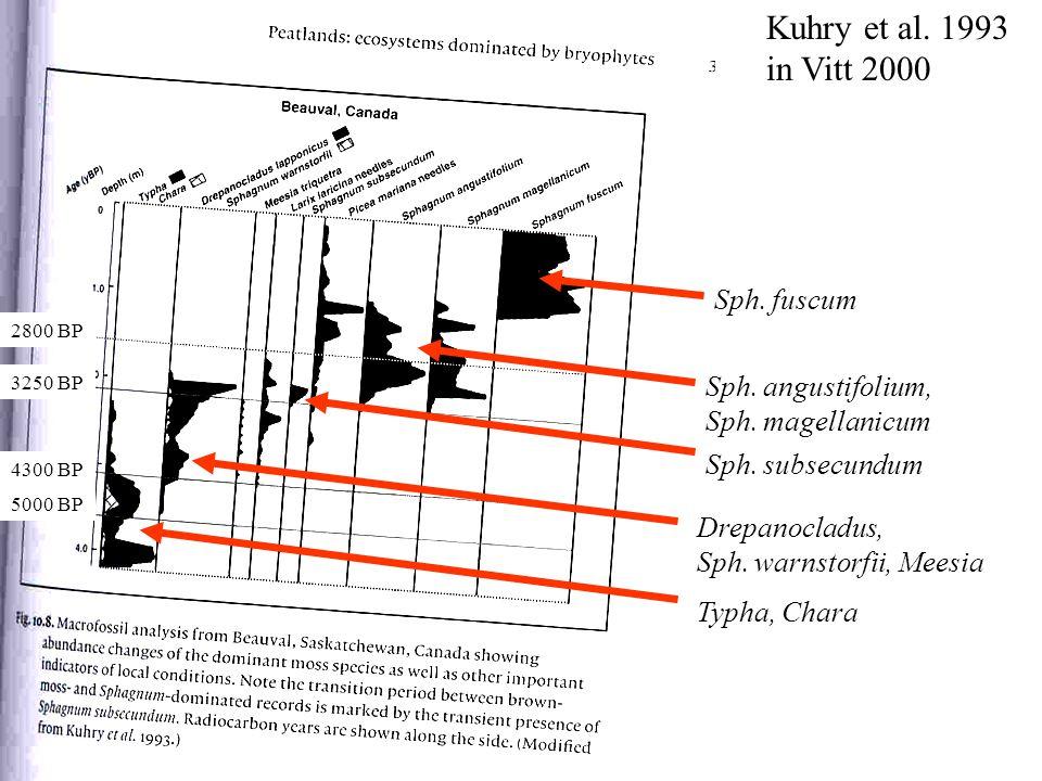 Kuhry et al.1993 in Vitt 2000 Typha, Chara Drepanocladus, Sph.