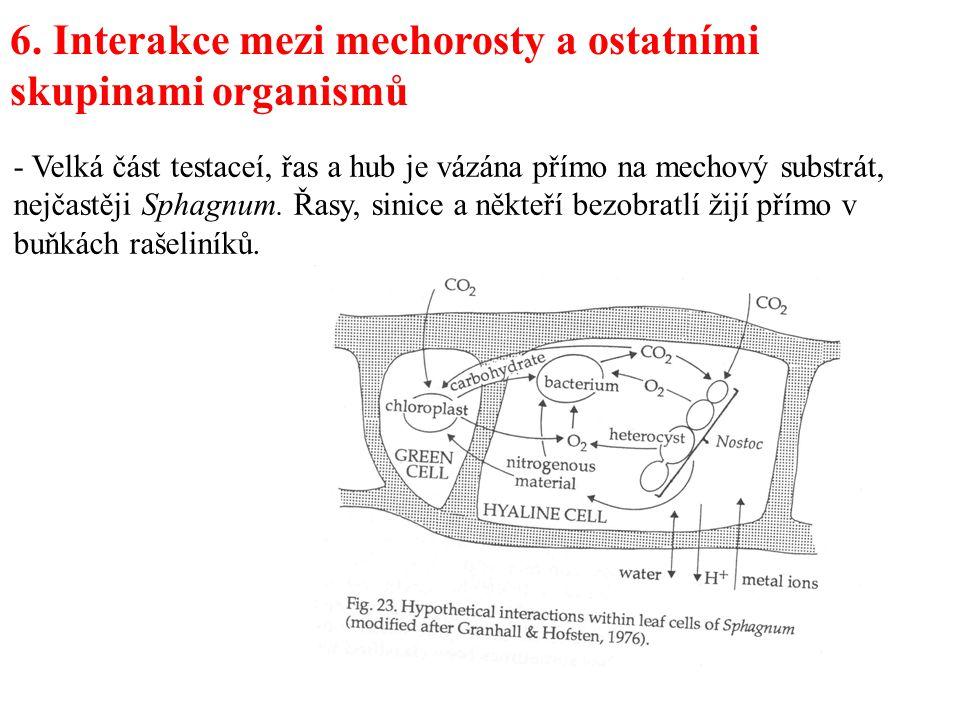 6. Interakce mezi mechorosty a ostatními skupinami organismů - Velká část testaceí, řas a hub je vázána přímo na mechový substrát, nejčastěji Sphagnum