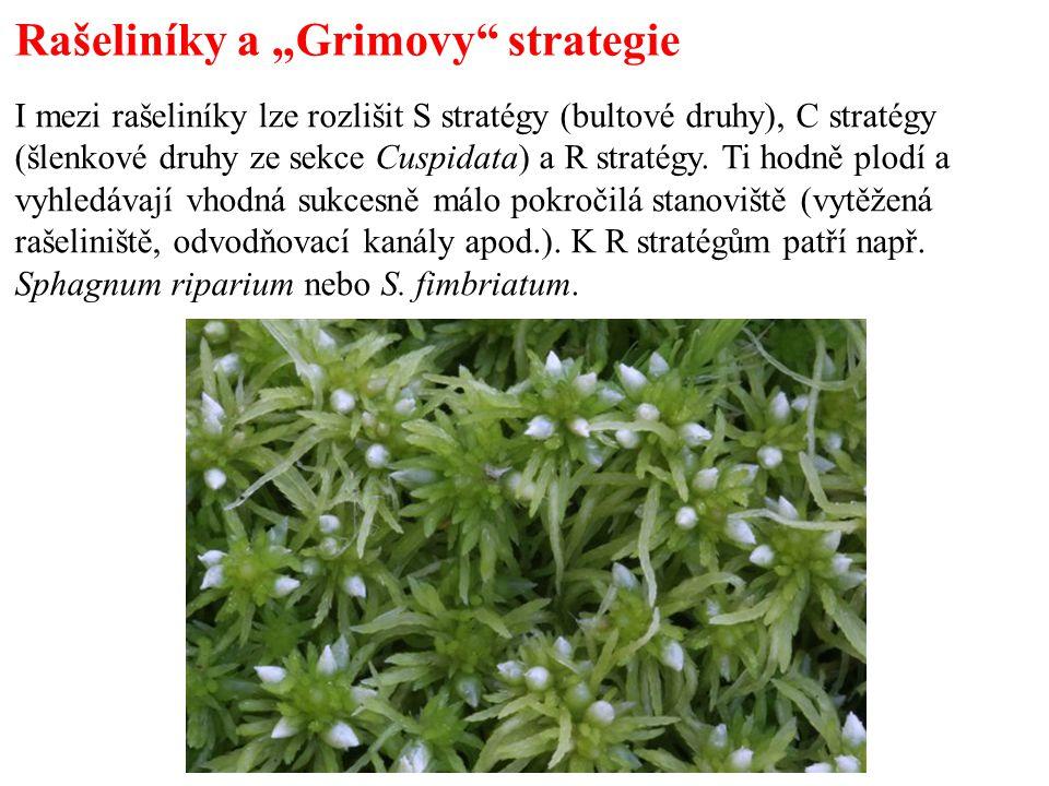 """Rašeliníky a """"Grimovy strategie I mezi rašeliníky lze rozlišit S stratégy (bultové druhy), C stratégy (šlenkové druhy ze sekce Cuspidata) a R stratégy."""