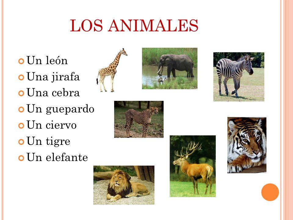 LOS ANIMALES Un león Una jirafa Una cebra Un guepardo Un ciervo Un tigre Un elefante