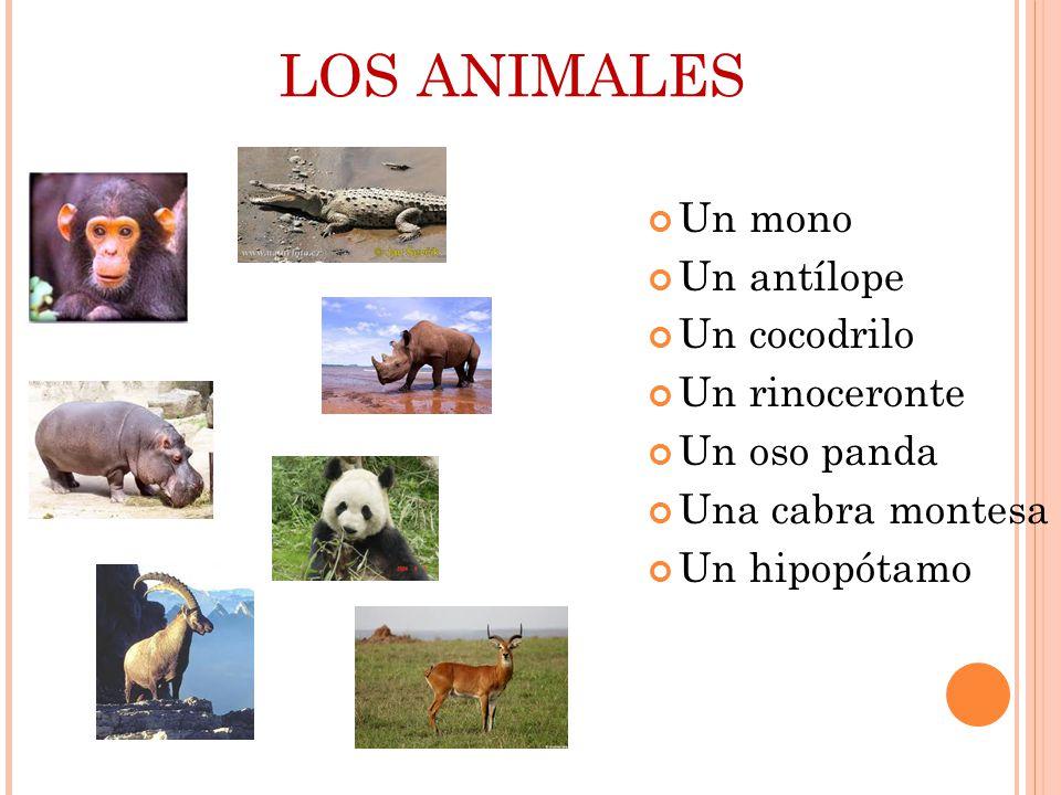 LOS ANIMALES Un mono Un antílope Un cocodrilo Un rinoceronte Un oso panda Una cabra montesa Un hipopótamo