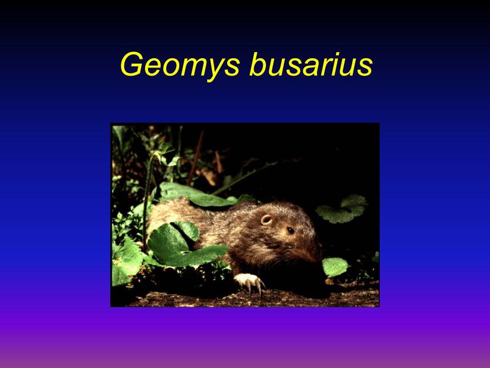 Kospeciace vší a pytlonošů A B C D E F G H a b c d e f g h i j pytlonoši Geomyidae vši Trichodectidae Thomomys Geomydoecus Orthogeomys Geomys Thomomydoecus