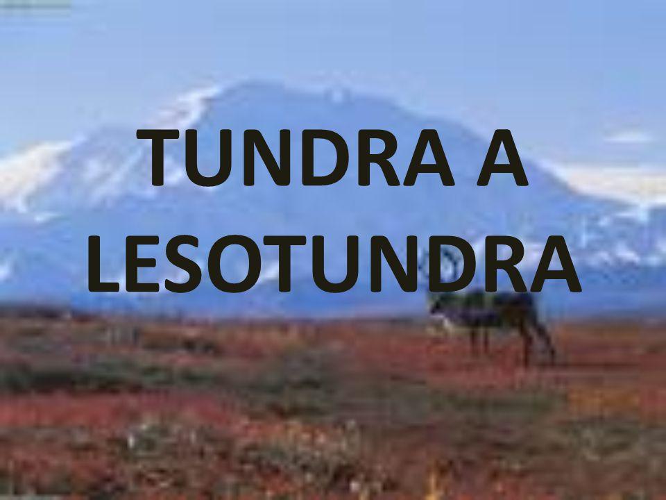 TUNDRA A LESOTUNDRA