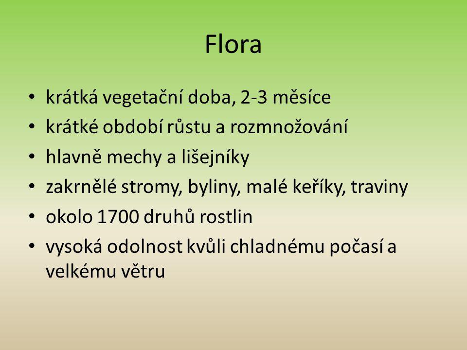 Flora krátká vegetační doba, 2-3 měsíce krátké období růstu a rozmnožování hlavně mechy a lišejníky zakrnělé stromy, byliny, malé keříky, traviny okolo 1700 druhů rostlin vysoká odolnost kvůli chladnému počasí a velkému větru