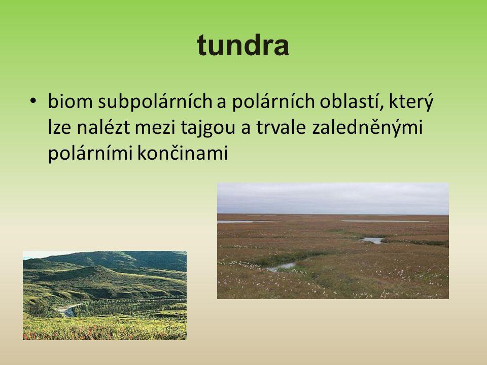 tundra biom subpolárních a polárních oblastí, který lze nalézt mezi tajgou a trvale zaledněnými polárními končinami
