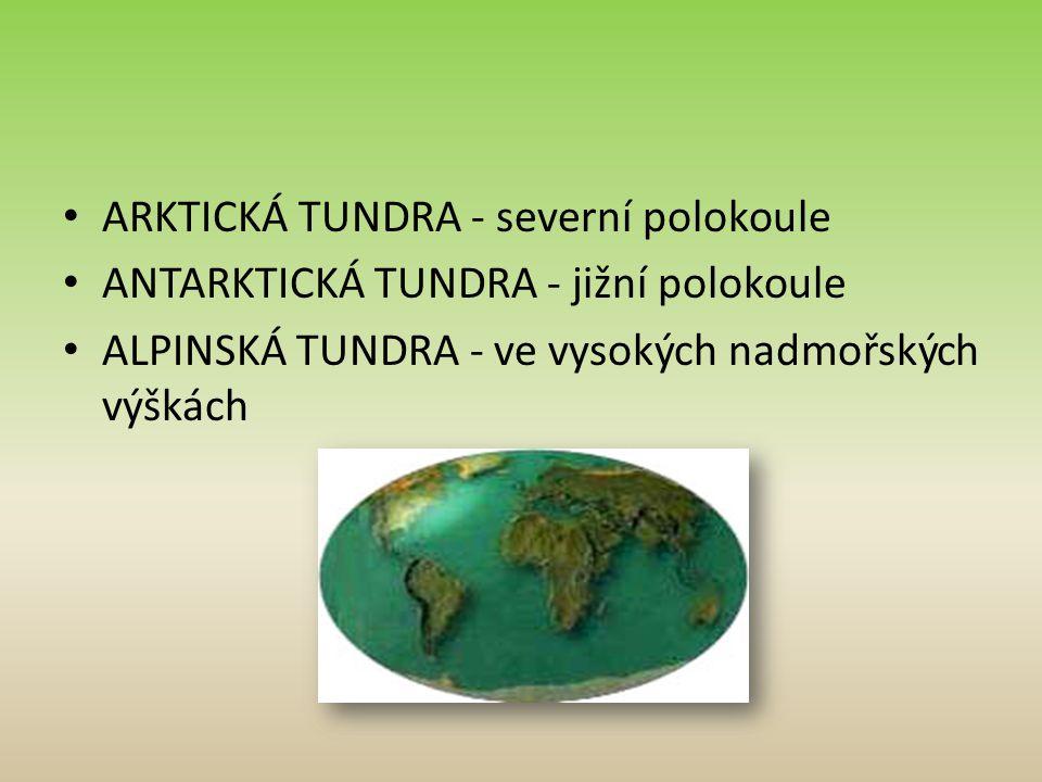 ARKTICKÁ TUNDRA - severní polokoule ANTARKTICKÁ TUNDRA - jižní polokoule ALPINSKÁ TUNDRA - ve vysokých nadmořských výškách