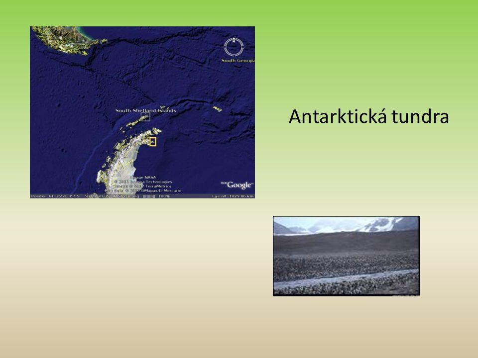 Antarktická tundra