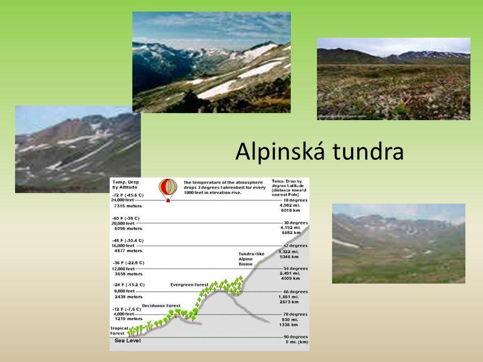 Alpinská tundra