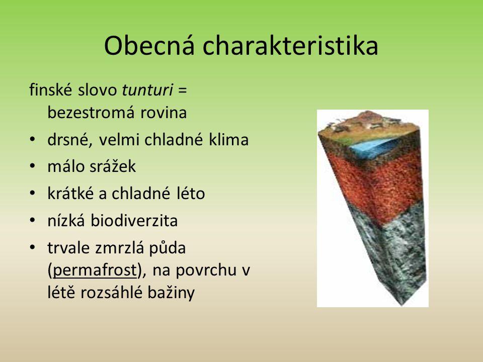 Obecná charakteristika finské slovo tunturi = bezestromá rovina drsné, velmi chladné klima málo srážek krátké a chladné léto nízká biodiverzita trvale zmrzlá půda (permafrost), na povrchu v létě rozsáhlé bažiny