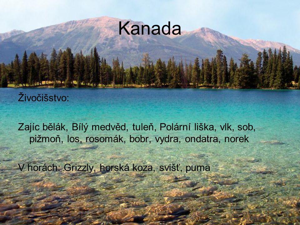 Kanada Živočišstvo: Zajíc bělák, Bílý medvěd, tuleň, Polární liška, vlk, sob, pižmoň, los, rosomák, bobr, vydra, ondatra, norek V horách: Grizzly, horská koza, svišť, puma