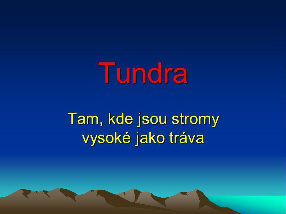 Tundra Tam, kde jsou stromy vysoké jako tráva