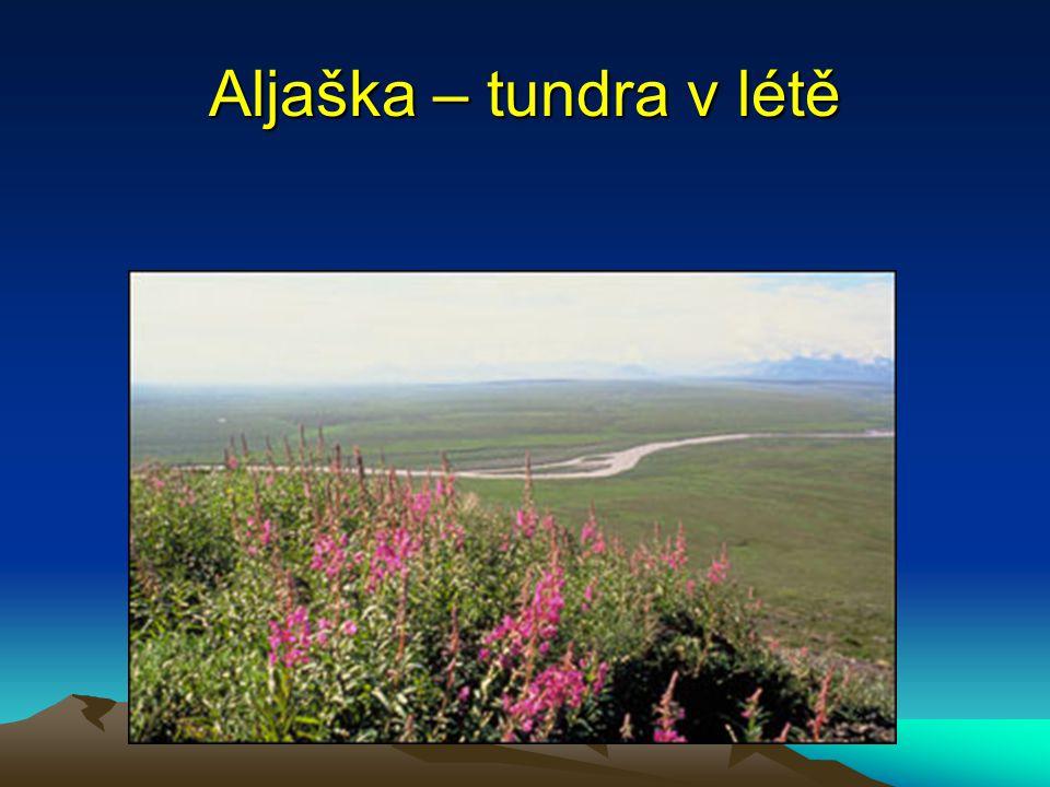 Aljaška – tundra v létě