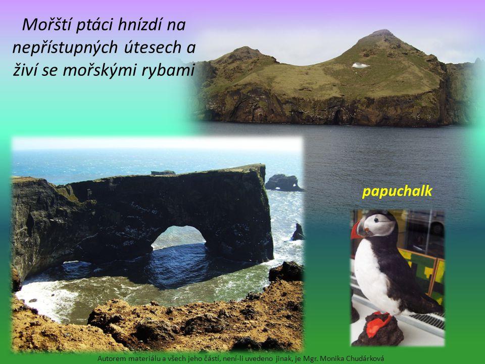 Mořští ptáci hnízdí na nepřístupných útesech a živí se mořskými rybami Autorem materiálu a všech jeho částí, není-li uvedeno jinak, je Mgr. Monika Chu