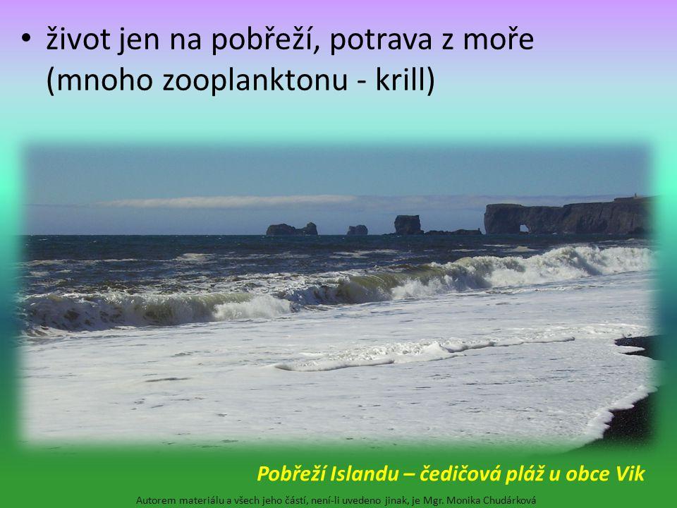 život jen na pobřeží, potrava z moře (mnoho zooplanktonu - krill) Autorem materiálu a všech jeho částí, není-li uvedeno jinak, je Mgr. Monika Chudárko