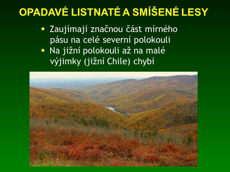  Proč listnaté stromy v mírném pásu shazují na zimu listí.