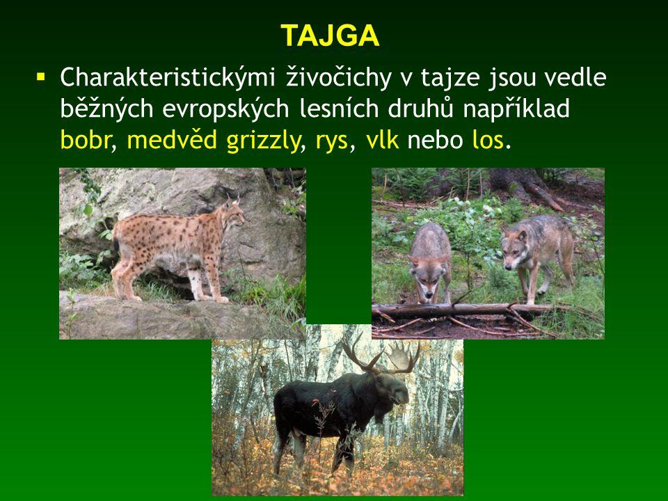 * text: originální dílo autora * fotografie: rodinný archiv autora a níže citované zdroje * TESAŘÍKOVÁ, P.