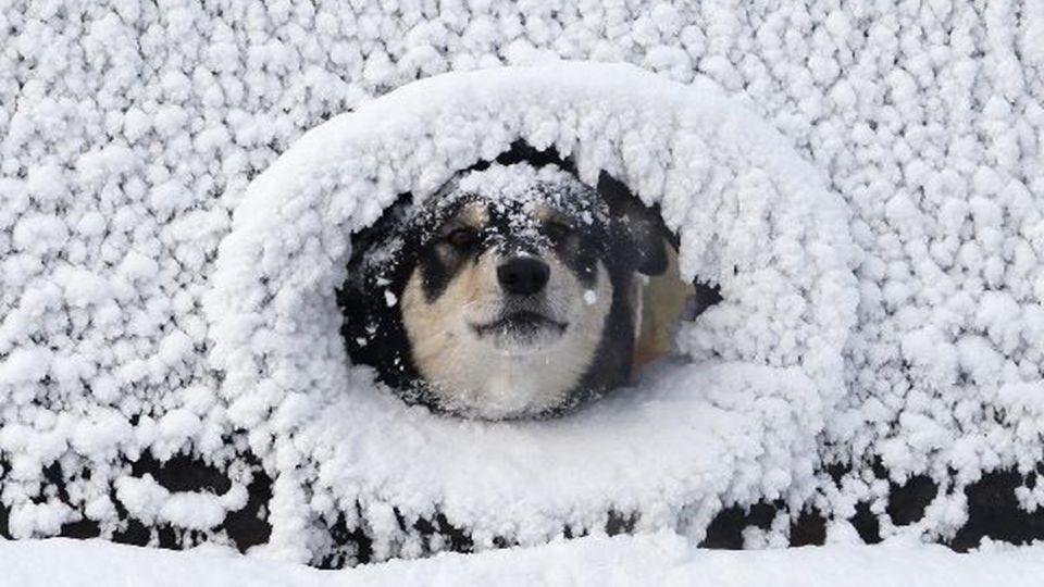 Ani psi to nemají lehké… Žena vstupující do katedrály budí dojem, jako by přicházela z mrazáku.