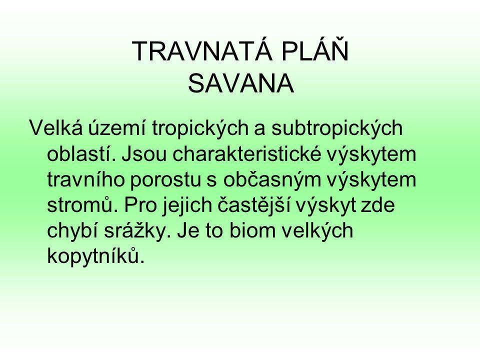 TRAVNATÁ PLÁŇ SAVANA Velká území tropických a subtropických oblastí.