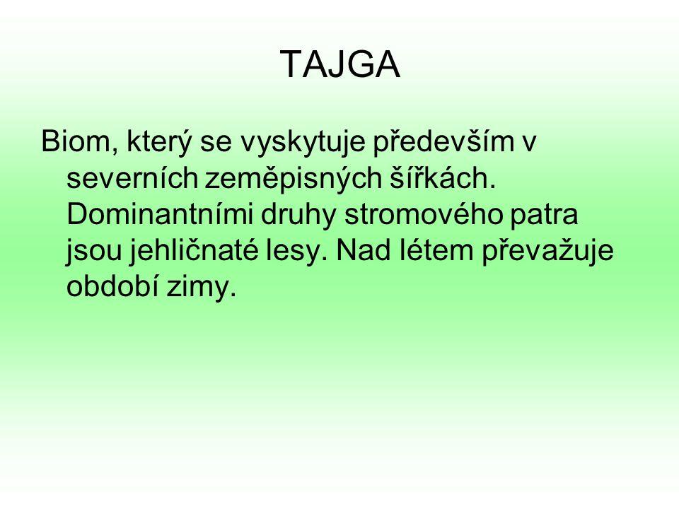TAJGA Biom, který se vyskytuje především v severních zeměpisných šířkách.