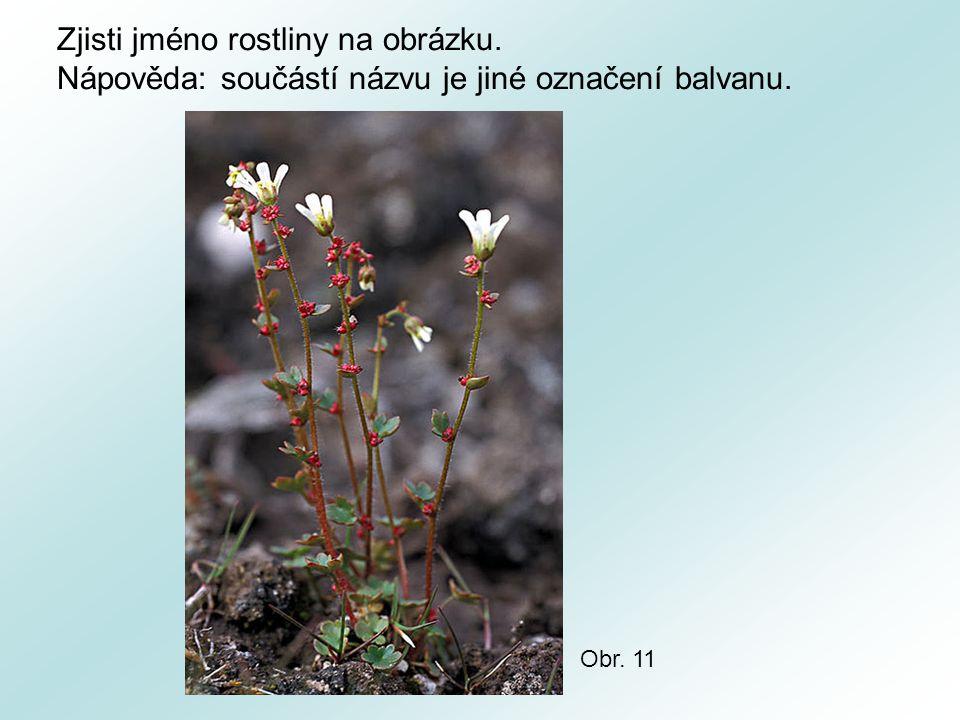 Zjisti jméno rostliny na obrázku. Nápověda: součástí názvu je jiné označení balvanu. Obr. 11