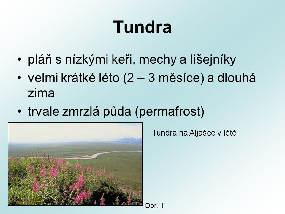 Tundra pláň s nízkými keři, mechy a lišejníky velmi krátké léto (2 – 3 měsíce) a dlouhá zima trvale zmrzlá půda (permafrost) Tundra na Aljašce v létě Obr.