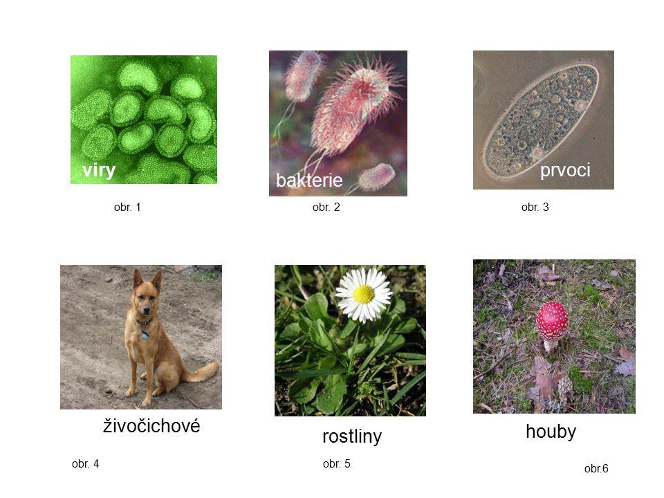 viry bakterie prvoci živočichové rostliny obr. 1obr. 2obr. 3 obr. 4 obr. 5 obr.6 houby