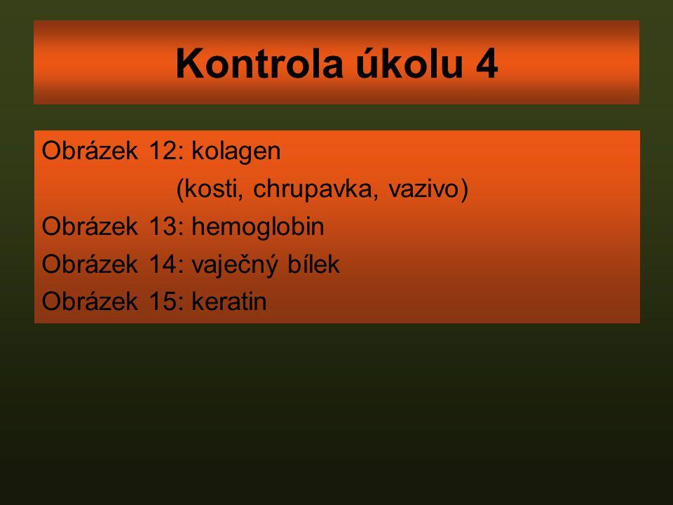 Kontrola úkolu 4 Obrázek 12: kolagen (kosti, chrupavka, vazivo) Obrázek 13: hemoglobin Obrázek 14: vaječný bílek Obrázek 15: keratin