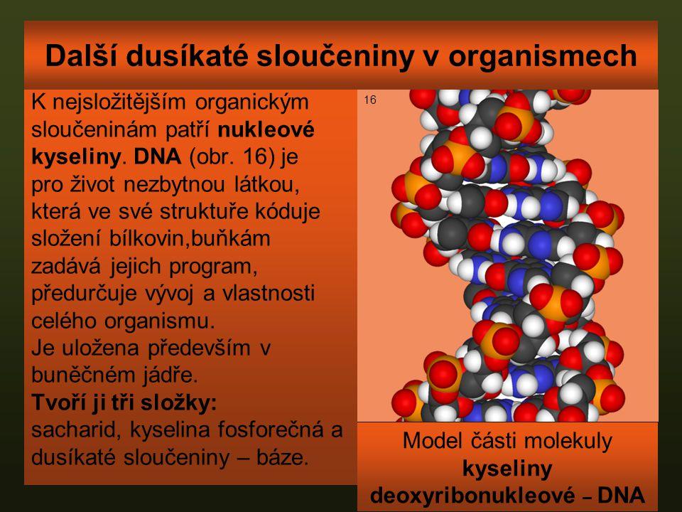Další dusíkaté sloučeniny v organismech K nejsložitějším organickým sloučeninám patří nukleové kyseliny. DNA (obr. 16) je pro život nezbytnou látkou,