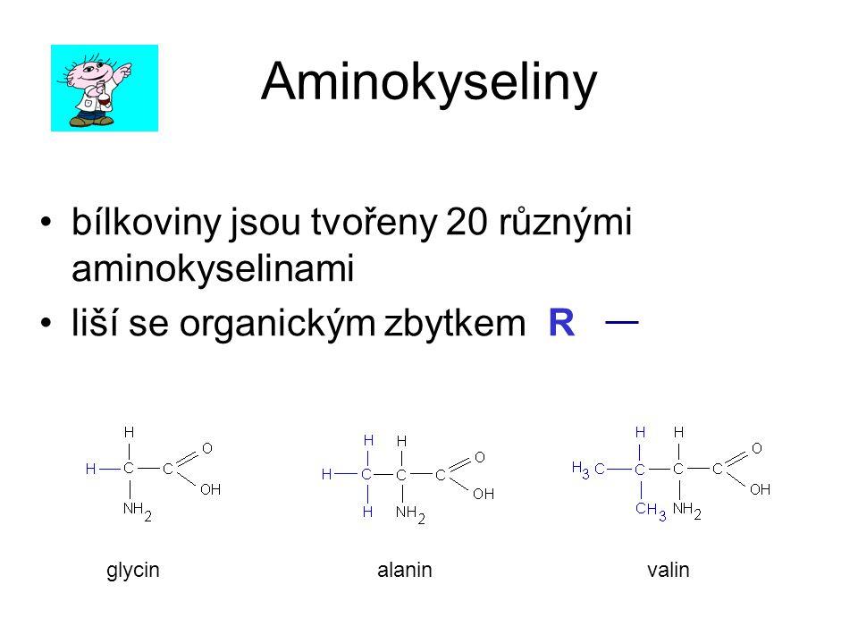 Aminokyseliny bílkoviny jsou tvořeny 20 různými aminokyselinami liší se organickým zbytkem R –vytvářejí řetězce ( dipeptidy, tripeptidy, polypeptidy …) glycinalaninvalin