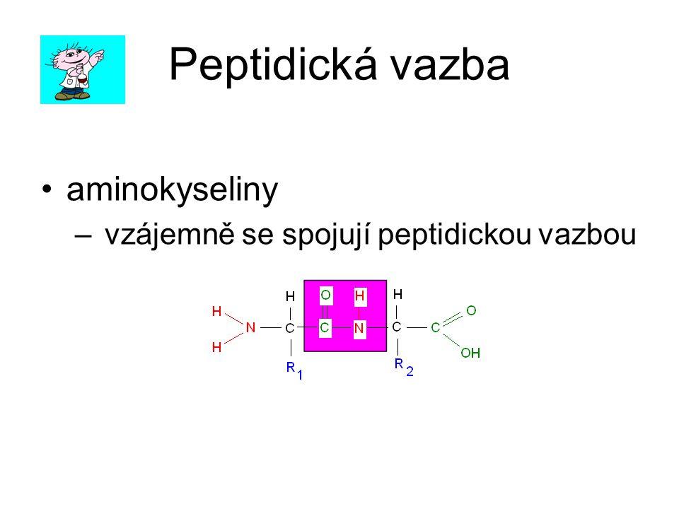 Peptidická vazba aminokyseliny – vzájemně se spojují peptidickou vazbou