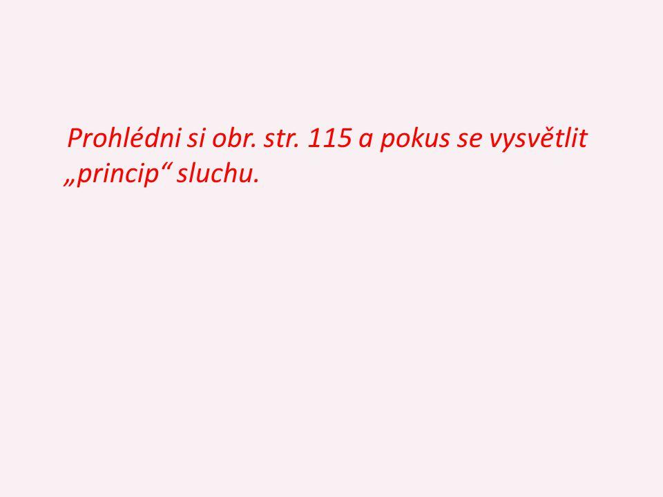boltec → zvukovod (2 - 3 cm) → bubínek → → kladívko → kovadlinka → třmínek → → kapalina vnitřního ucha → blanka (stěna) blanitého hlemýždě (2,5 závitu) se sluchovými buňkami Eustachova trubice - střední ucho ↔ nosohltan - k vyrovnávání tlaku vzduchu centrum sluchu - spánkový lalok koncového mozku str.