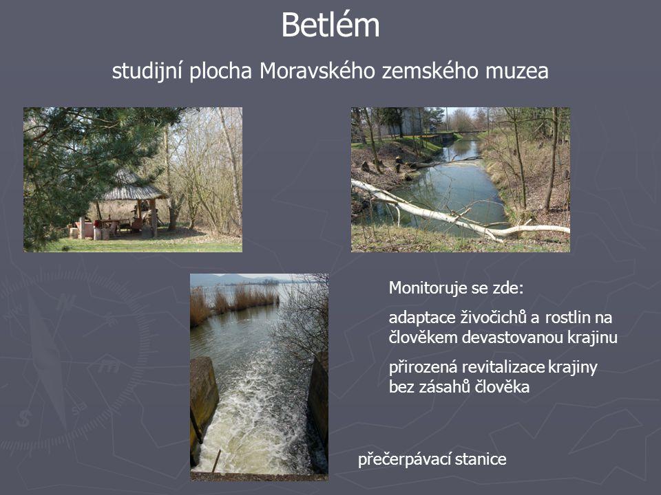 Betlém studijní plocha Moravského zemského muzea Monitoruje se zde: adaptace živočichů a rostlin na člověkem devastovanou krajinu přirozená revitalizace krajiny bez zásahů člověka přečerpávací stanice