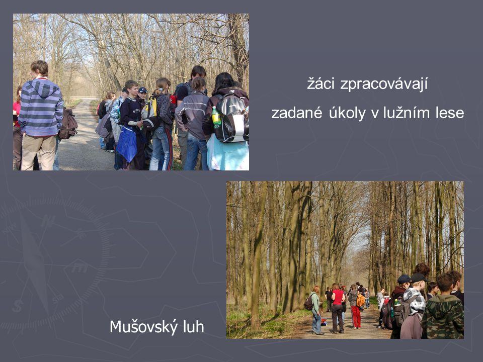 žáci zpracovávají zadané úkoly v lužním lese Mušovský luh