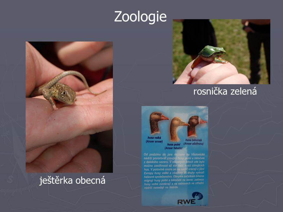 Zoologie rosnička zelená ještěrka obecná
