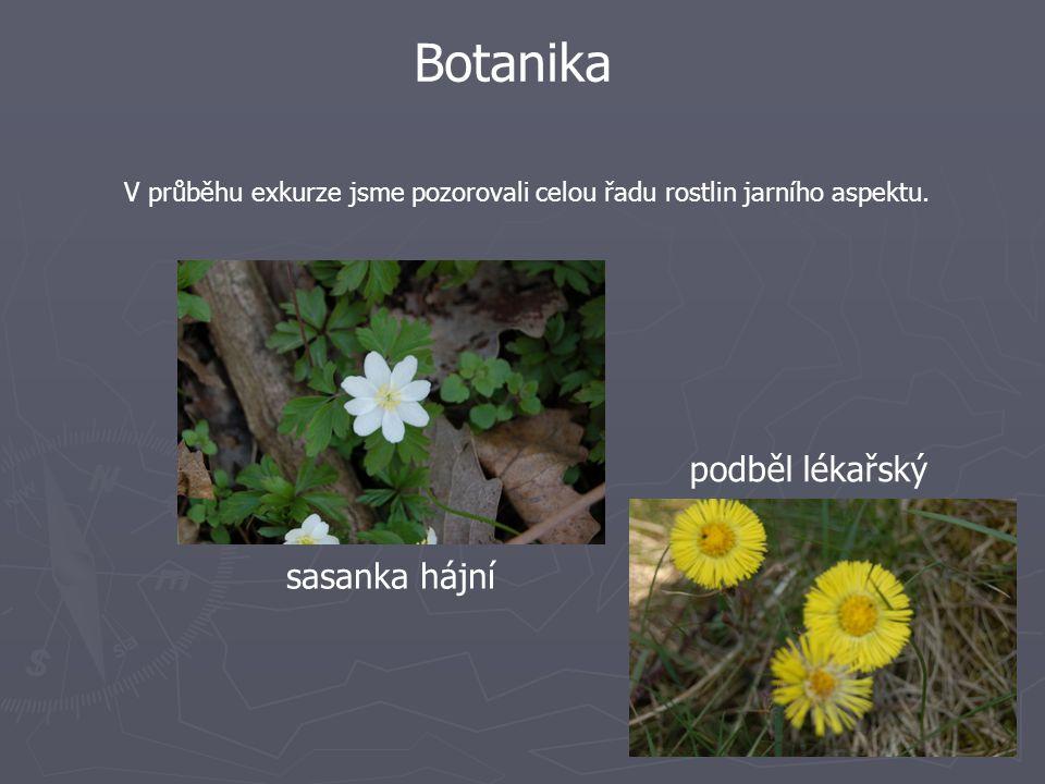 Botanika V průběhu exkurze jsme pozorovali celou řadu rostlin jarního aspektu.