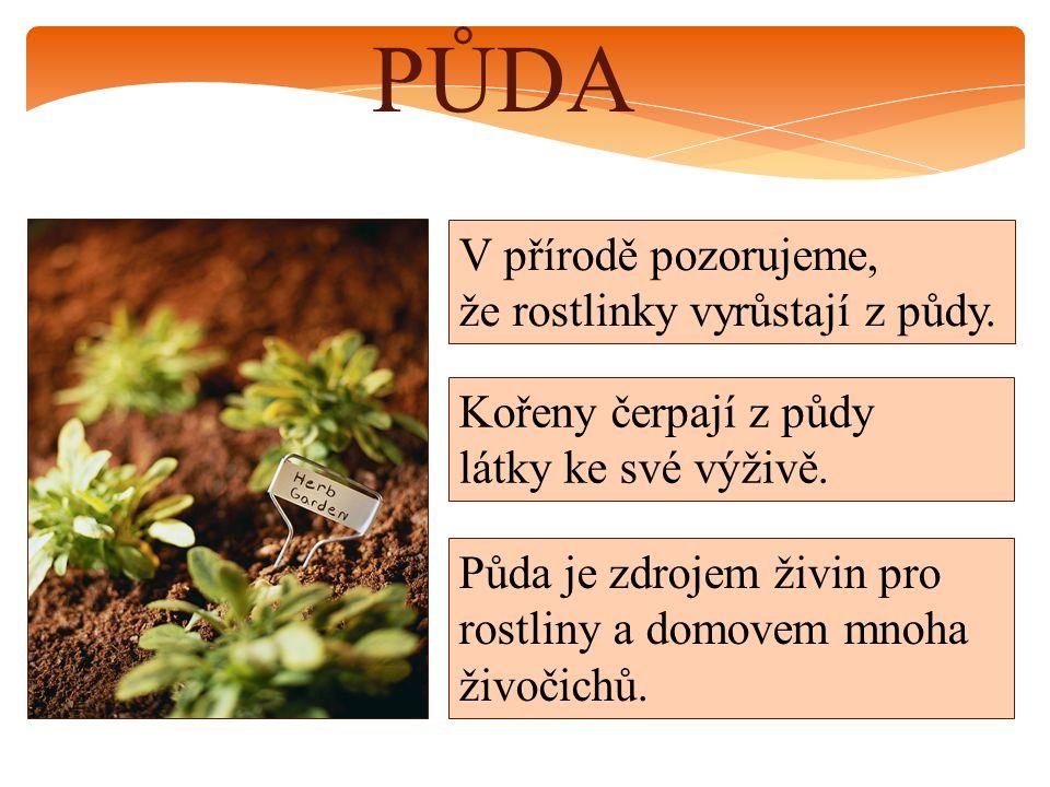 PŮDA V přírodě pozorujeme, že rostlinky vyrůstají z půdy. Kořeny čerpají z půdy látky ke své výživě. Půda je zdrojem živin pro rostliny a domovem mnoh