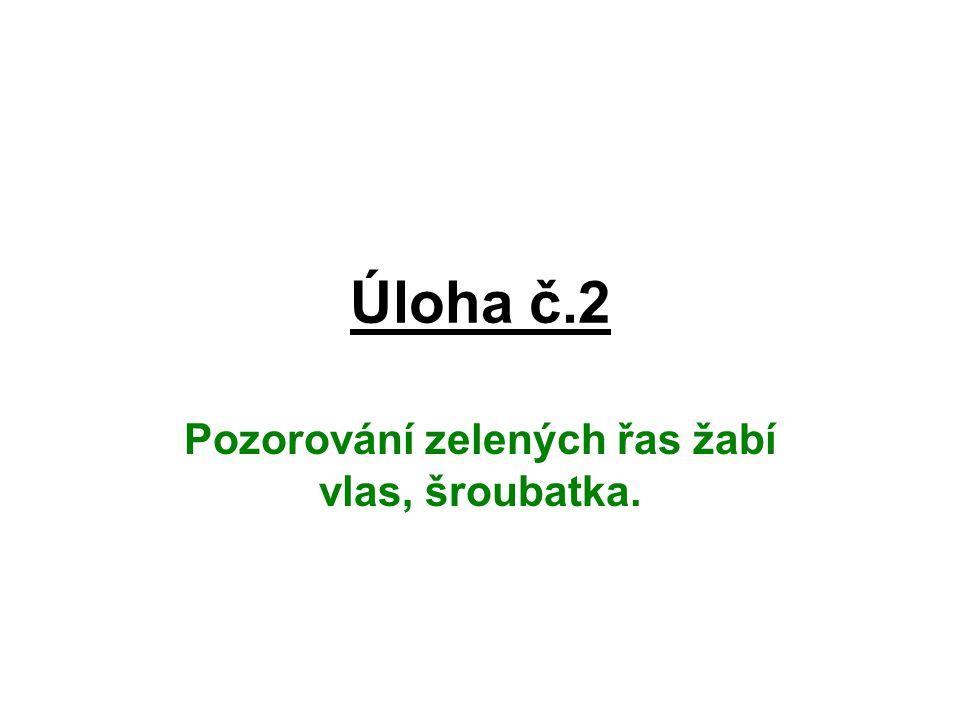 Postup č.2 Pomůcky: žabí vlas,šroubatka, Lugolův roztok.