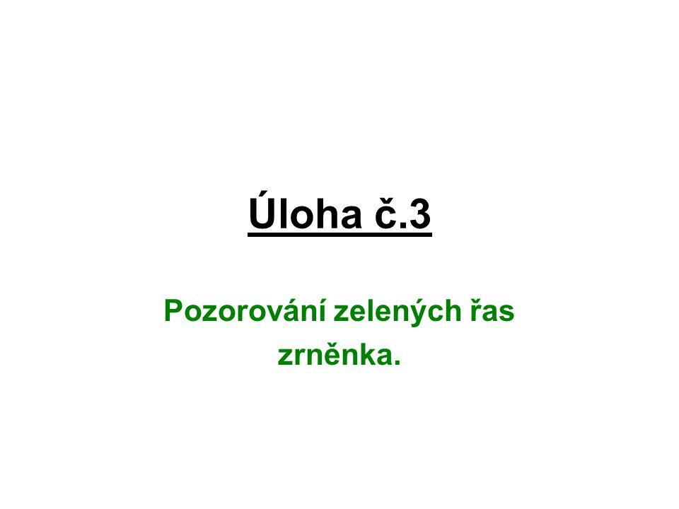 Úloha č.3 Pozorování zelených řas zrněnka.