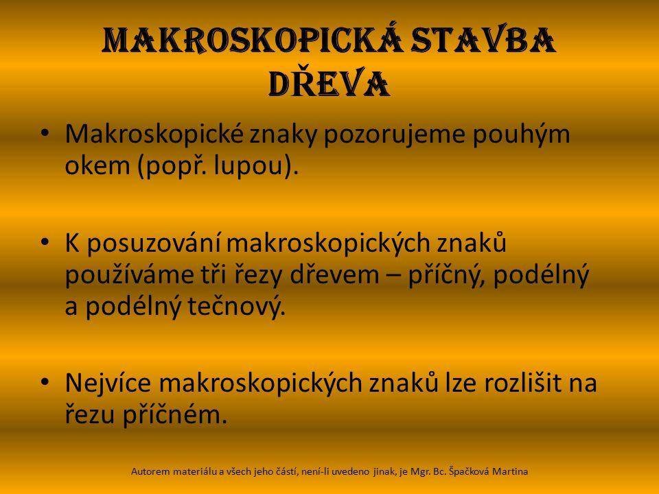 MAKROSKOPICKÁ STAVBA D Ř EVA Dřeň – je uprostřed kmene, v ideálním případě v jeho geometrickém středu.