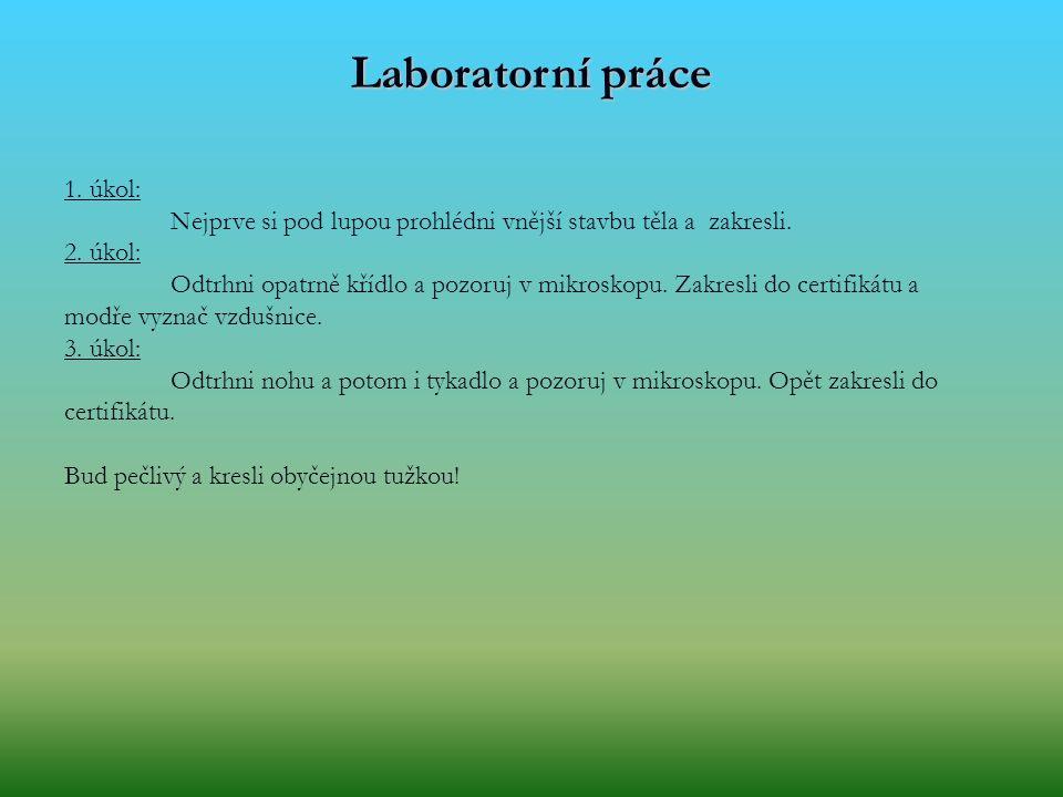 Laboratorní práce 1. úkol: Nejprve si pod lupou prohlédni vnější stavbu těla a zakresli. 2. úkol: Odtrhni opatrně křídlo a pozoruj v mikroskopu. Zakre