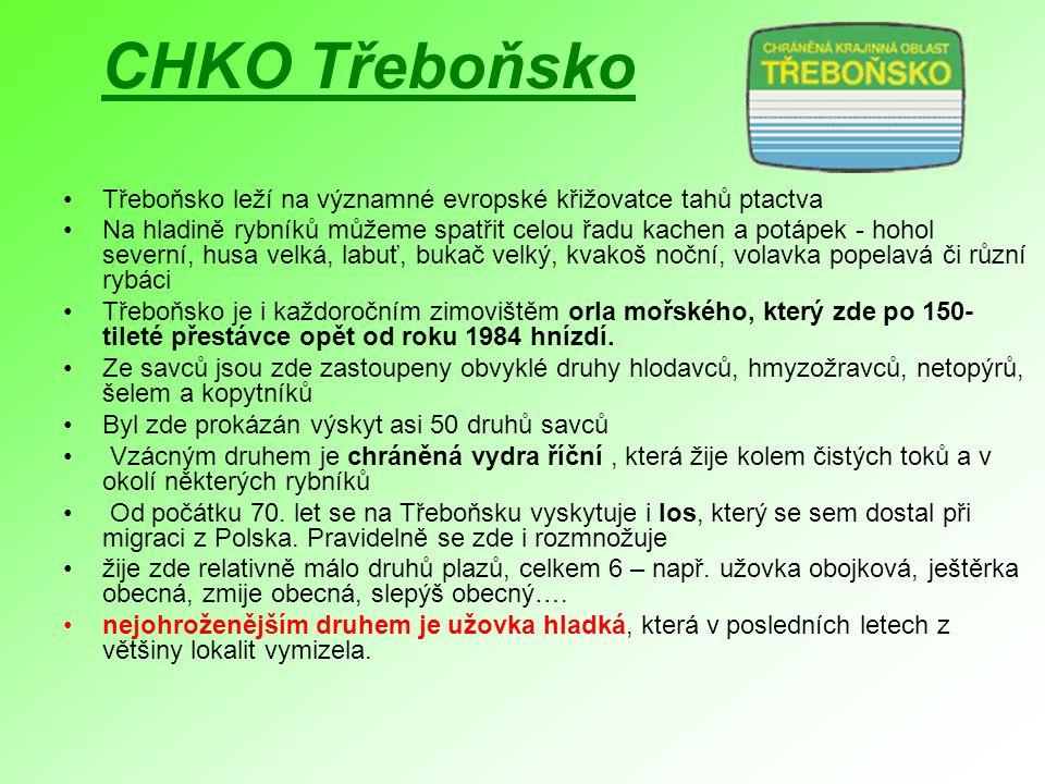 CHKO Třeboňsko Třeboňsko leží na významné evropské křižovatce tahů ptactva Na hladině rybníků můžeme spatřit celou řadu kachen a potápek - hohol sever