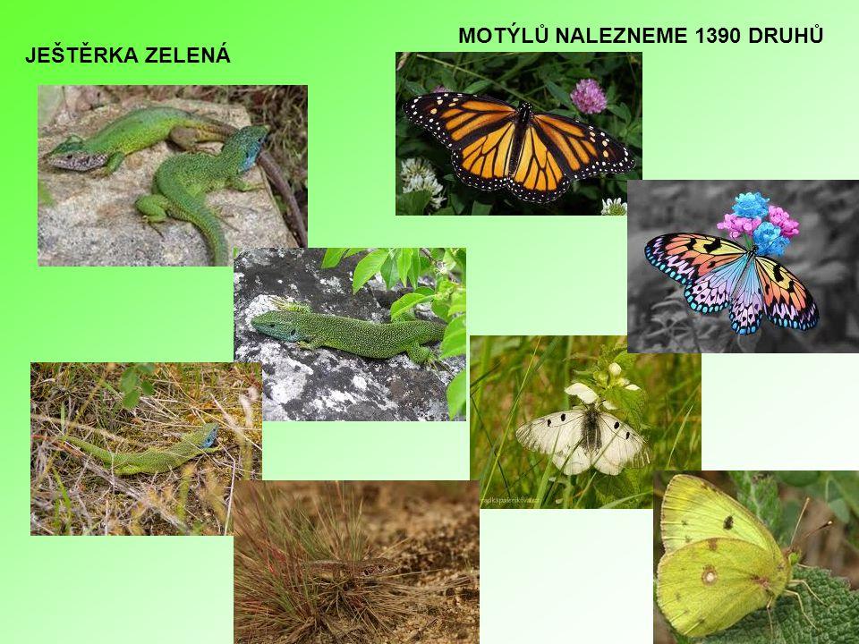 CHKO Třeboňsko Třeboňsko leží na významné evropské křižovatce tahů ptactva Na hladině rybníků můžeme spatřit celou řadu kachen a potápek - hohol severní, husa velká, labuť, bukač velký, kvakoš noční, volavka popelavá či různí rybáci Třeboňsko je i každoročním zimovištěm orla mořského, který zde po 150- tileté přestávce opět od roku 1984 hnízdí.