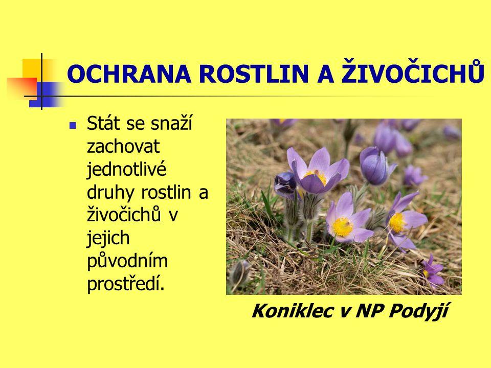 OCHRANA ROSTLIN A ŽIVOČICHŮ Stát se snaží zachovat jednotlivé druhy rostlin a živočichů v jejich původním prostředí. Koniklec v NP Podyjí