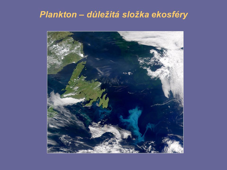 Plankton – důležitá složka ekosféry
