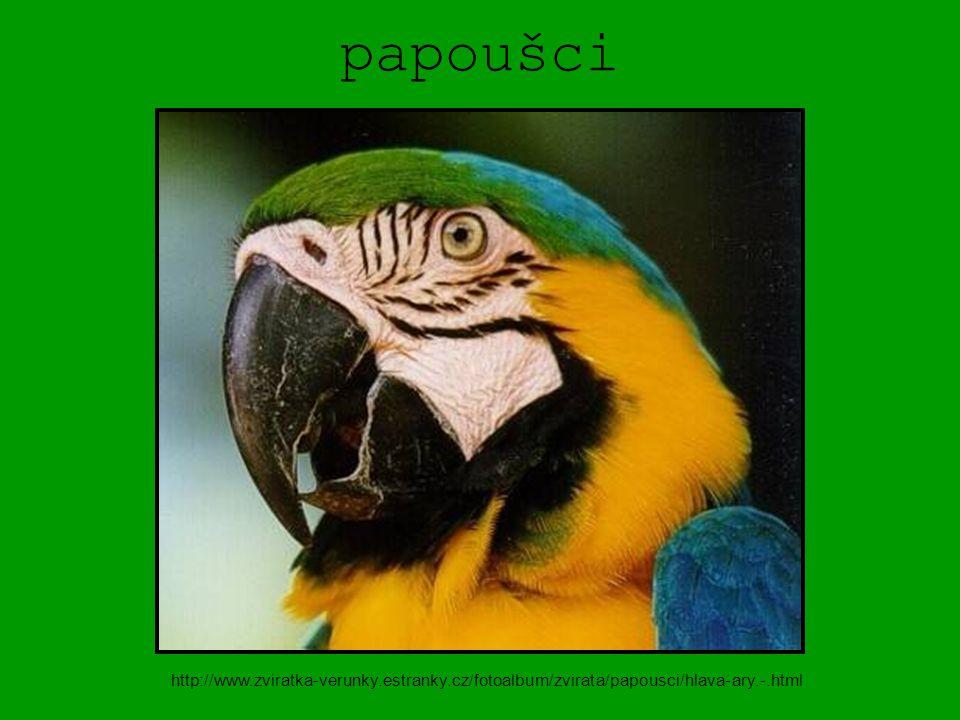 papoušci http://www.zviratka-verunky.estranky.cz/fotoalbum/zvirata/papousci/hlava-ary.-.html