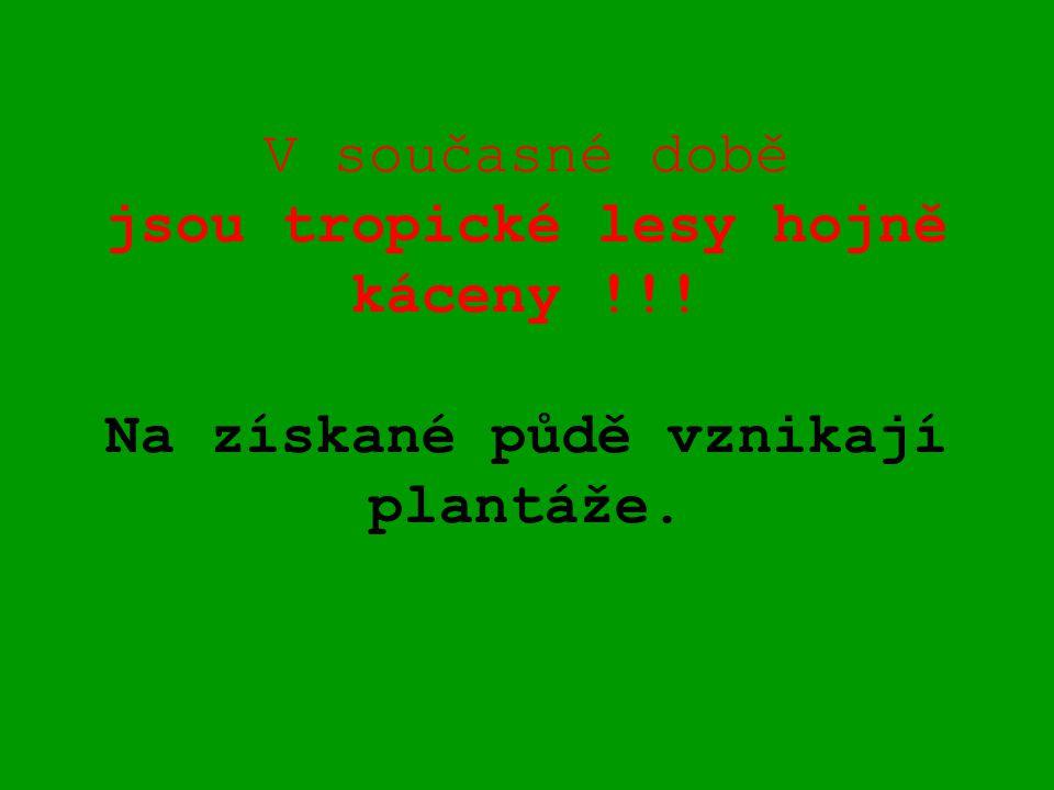 V současné době jsou tropické lesy hojně káceny !!! Na získané půdě vznikají plantáže.